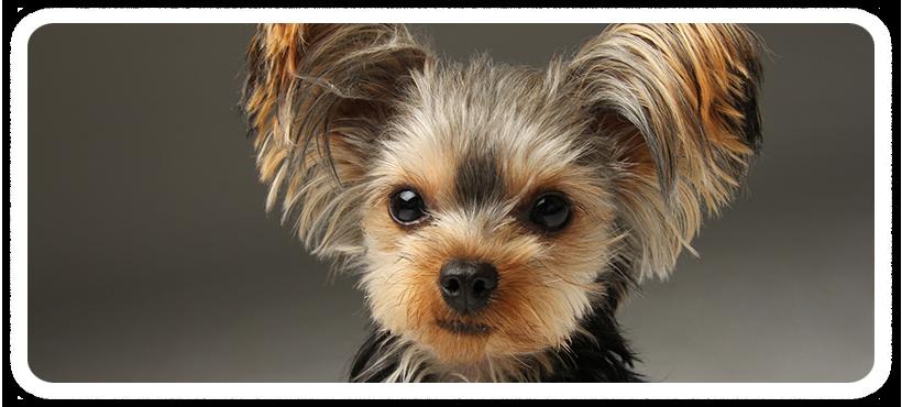 犬のトリミングサロン・ペットホテルは国立・国分寺・立川|ペットスタジオディノトップ画像3